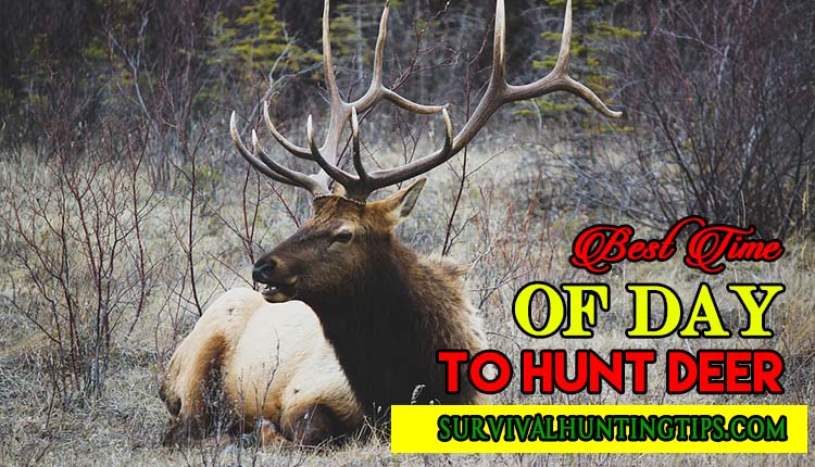 What is the best time of day to hunt deer?