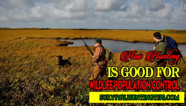 How Hunting Is Good For Wildlife Population Control