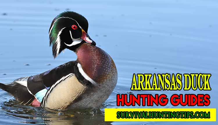 Do You About Arkansas Duck Hunting Guides
