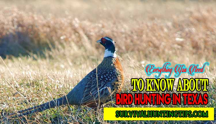 Everything You Need to Know about Bird Hunting in Texas