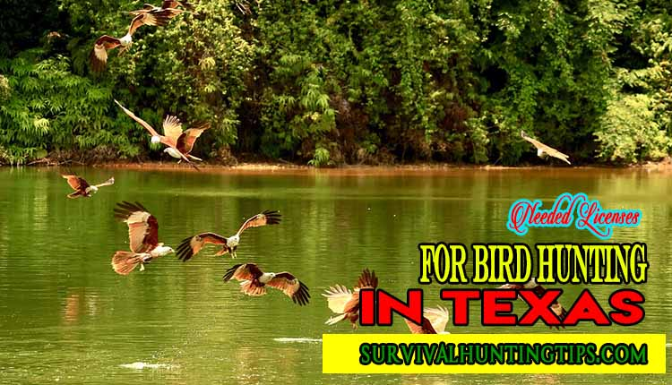 Needed Licenses for Bird Hunting in Texas
