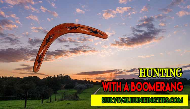 What You Will Need to Hunt With a Boomerang
