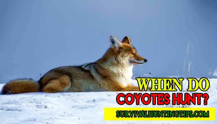 When Do Coyotes Hunt