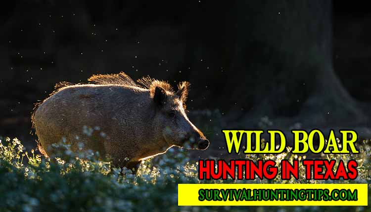 Wild Boar Hunting In Texas