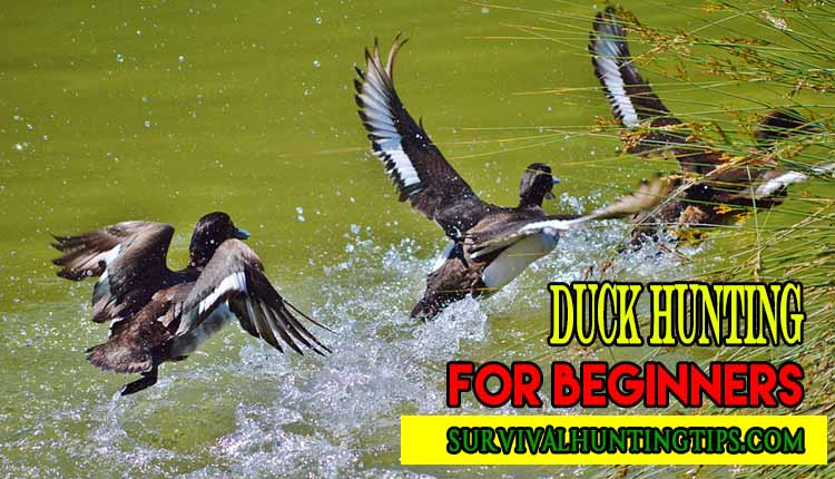 Duck Hunting for Beginners A Simple Step By Step Guide On