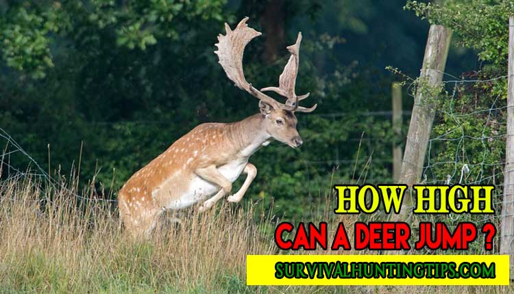 How High Can A Deer Jump