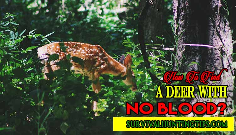How To Find A Deer With No Blood