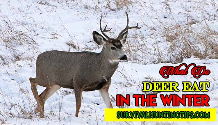 Finding What Do Deer Eat In The Winter Harsh Periods