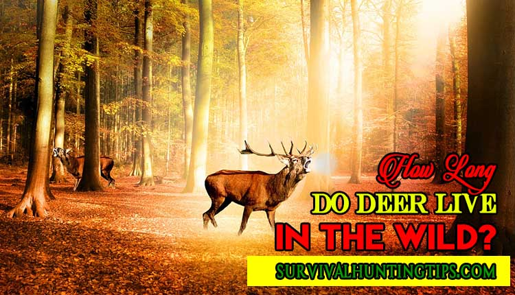 How Long Do Deer Live In The Wild?