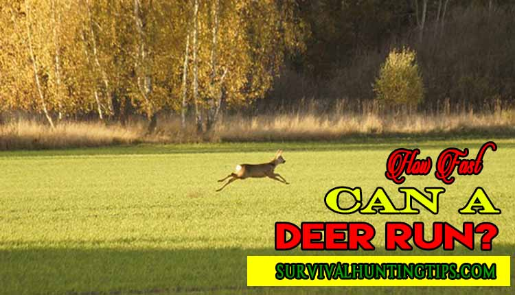 How Fast Can A Deer Run?