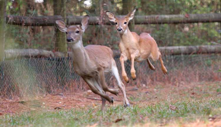 Some Tips For Hunting The Deer