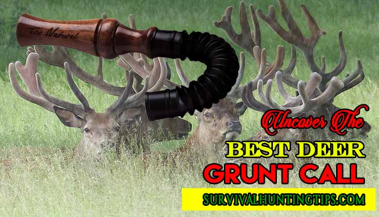 Uncover The Best Deer Grunt Call