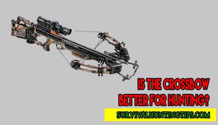 Is The Crossbow Better For Hunting