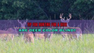 Are Deer Color Blind